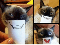 Grumpy Cat, Pusheen, and Cat: Look at this awesome cat photoshoot :D. Hehe :) Join Pusheen the Cat