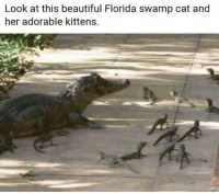 Beautiful, Florida, and Kittens: Look at this beautiful Florida swamp cat and  her adorable kittens.