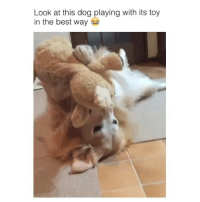 Comment ur Favorite Emoji: Look at this dog playing with its toy  in the best way Comment ur Favorite Emoji