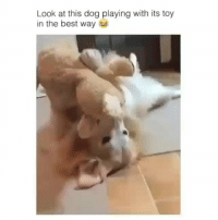 Poor guy wants someone to play with so bad! | @cuteandfuzzybunch: Look at this dog playing with its toy  in the best way Poor guy wants someone to play with so bad! | @cuteandfuzzybunch