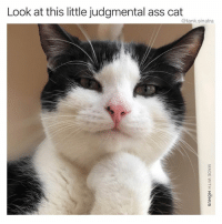 Ass, Funny, and Cat: Look at this little judgmental ass cat  @tank.sinatra Maybe if I had 9 lives