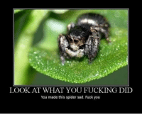 LOOK AT WHAT YOU FUCKING DID  You made this spider sad. Fuck you ♤♤♤♤♤