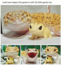 Happy, How, and Boi: Look how happy this gecko is with his little gecko toy Happy lil boi