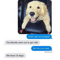 Memes, 🤖, and Milk: Look I got us a pup  You literally went out to get milk  But he's so cute!  Delivered  We have 23 dogs @tinderonians posts hilarious memes. Go follow her and her 23..er 24 dogs @tinderonians @tinderonians @tinderonians
