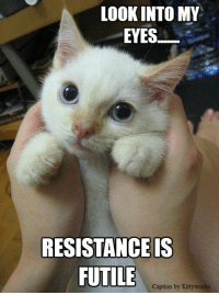 Memes, Collective, and Look Into My Eyes: LOOK INTO MY  EYES  RESISTANCE IS  FUTILE  Caption by Kittyworks You are now part of the collective!