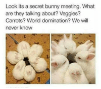 Bunnies, Memes, and 🤖: Look its a secret bunny meeting. What  are they talking about? Veggies?  Carrots? World domination? We will  never know (y) Fantasy and Sci-Fi Rock My World