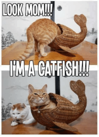 Look Mom: LOOK MOM!!!  IMA CATFISHIIT