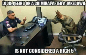 Meme, Dog, and Service: LOOK!PEEINGONACRIMINALAFTENATAKEDOWNİ  IS NOT CONSIDERED AHIGH 5 Service Dog Meme Dump
