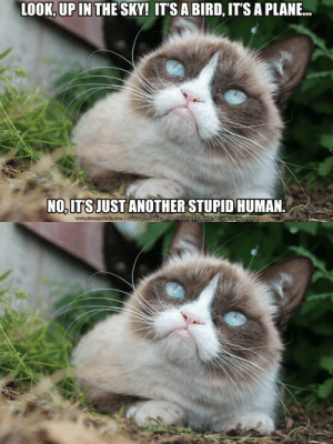 realgrumpycat:  The Daily Grump | June 22, 2013: LOOK, UP IN THE SKY! IT'S A BIRD, IT'S A PLANE.  ....  NO, ITS JUST ANOTHER STUPID HUMAN.  o myoa.som |wsbocbook comheoffietslorumpyeas RealGrampycat realgrumpycat:  The Daily Grump | June 22, 2013