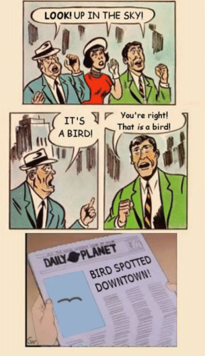 Its Super bird [OC]: LOOK! UP IN THE SKY!  You 're right!  That is a bird!  IT'S  A BIRD!  DAILY PLANET  BIRD SPOTTED  DOWNTOWN! Its Super bird [OC]