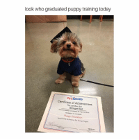 Awww! So cute! Tag a dog lover!😍: look who graduated puppy training today  PETSMART  Certificate of Achievement  This certifies has Stringer Bell  successfully completed all requirements  necessary to complete  Puppy Education  Sponsored By the PetSmart Pet Training Program  instructor  10-15.16 Awww! So cute! Tag a dog lover!😍