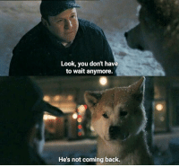 Memes, 🤖, and Hachiko: Look, you don't have  to wait anymore.  He's not coming back. Hachiko: A Dog's Story