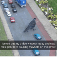 Animals, Crazy, and Cute: looked out my office window today and saw  this giant birb causing mayhem on the street Someone call the avengers 🐦 (RP♻️ @asleepinthemuseum - follow her, she's funny as heck! @asleepinthemuseum @asleepinthemuseum) • • • bird birds mutant perspective illusion illusions repost meme memes memesfordays memesdaily dank dankmemes memeoftheday memestagram animal animals joke funny wow omg crazy nochill lol tbt throwbackthursday thursday instagood cute me