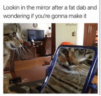 Can't Feel My Face, Memes, and Mirror: Lookin in the mirror after a fat dab and  wondering if you're gonna make it  @TopTree I can't feel my face right meow... 🙀 (follow my backup @smoketoptree) 🔥