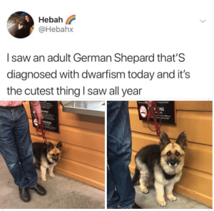 Lookin wonderful my smol German fren: Lookin wonderful my smol German fren