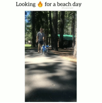 It's called fashion sweetie!! Tag someone who is fierce! 😂 ❤️ @funpawcare . . @chewlikecharley puppylove dogwalking doglover puppies puppy pupper puppers puppiesofinstagram dogstagram perro adopt rescue adoptdontshop foster dogs dog fierce fashion model beach beachday style hot sexy funny love dogsofinstagram doglove doglovers furbaby: Looking & for a beach day  @funpawcare It's called fashion sweetie!! Tag someone who is fierce! 😂 ❤️ @funpawcare . . @chewlikecharley puppylove dogwalking doglover puppies puppy pupper puppers puppiesofinstagram dogstagram perro adopt rescue adoptdontshop foster dogs dog fierce fashion model beach beachday style hot sexy funny love dogsofinstagram doglove doglovers furbaby