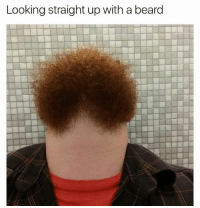 Beard, Memes, and Penis: Looking straight up with a beard Whos penis is this? @mmw2685