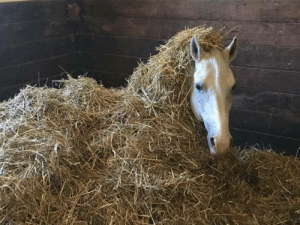 Tumblr, Lost, and Blog: looking4myson:  spidermanlet: zorri: *in a horse accent* help  This is the horse equivalent of being lost in the sauce   astray in the hay!!!!!!!!