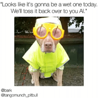 """Important weather update from @tangomunch_pitbull @bark: """"Looks like it's gonna be a wet one today.  We'll toss it back over to you Al.""""  @bark  @tangomunch pitbull Important weather update from @tangomunch_pitbull @bark"""