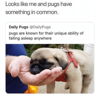 Memes, Butterfly, and Common: Looks like me and pugs have  something in common.  Daily Pugs @DailyPugs  pugs are known for their unique ability of  falling asleep anywhere We are all pugs. @x__social_butterfly__x delivering daily cuteness.