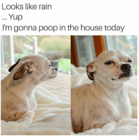 Memes, Poop, and House: Looks like rain  Yup  I'm gonna poop in the house today I'm staying in too