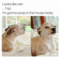 yup: Looks like rain  Yup  I'm gonna poop in the house today  .9
