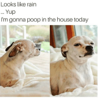 Funny, Poop, and House: Looks like rain  Yup  I'm gonna poop in the house today Literally my dog smdh😑