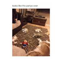Lol, Party, and Girl Memes: looks like the partys over did they take turns with that stuffed doll lol