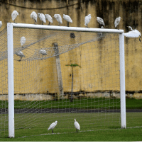 Memes, Birds, and 🤖: Looks like these egrets can't wait for the African Cup of Nations to kick off again – and neither can we! Who do you think will reach the final? CAN2017 AFCON Africa CAF nature birds egrets wildlife photooftheday