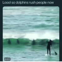 Funny, Gangsta, and Dolphin: Loool so dolphins rush people now  0:03 Gangsta dolphin.. funniest15 viralcypher funniest15seconds