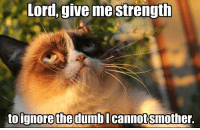 Grumpy Cat, Cat, and Lord: Lord, give me strength  to ignore the dumbl  cannot Smother. Join -> Grumpy Cat. for more :)