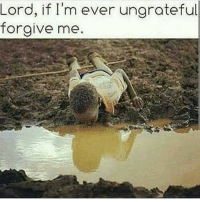 Memes, 🤖, and Best Pages: Lord, if I'm ever ungrateful  forgive me Follow one of the best pages on Instagram @farrahgray_ @farrahgray_ @farrahgray_ imjustsaying inspirational motivational imblessed trustandbelieve dontquit church youcanmakeit blessing faith truestory prayers word real realtalk facts bible god truthbetold reallifesituations wisdom wordstoliveby Amen Godisgood praisehim Godlovesyou thankyoujesus