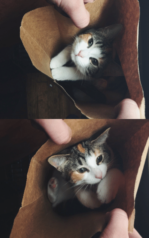 Target, Tumblr, and Blog: lord-kitschener:Reach WITHIN to your LOCAL paper bag and you may find a FRIEND And BOY