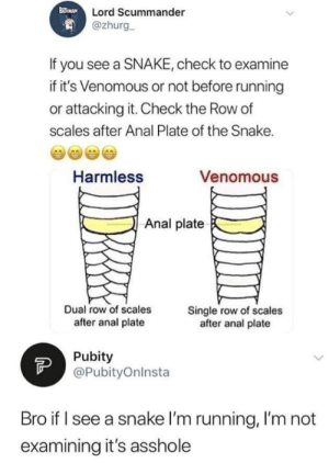 Well said: Lord Scummander  @zhurg  If you see a SNAKE, check to examine  if it's Venomous or not before running  or attacking it. Check the Row of  scales after Anal Plate of the Snake.  Harmless  Venomous  Anal plate  Dual row of scales  Single row of scales  after anal plate  after anal plate  FP  Pubity  @PubityOnlnsta  Bro if I see a snake I'm running, I'm not  examining it's asshole Well said