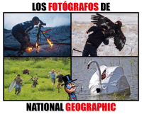 Memes, National Geographic, and 🤖: LOS  FOTOGRAFOS  DE  NATIONAL GEOGRAPHIC Un hermoso y a la vez riesgoso trabajo