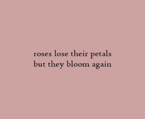 bloom: lose their petals  but they bloom again  roses