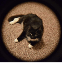 Lost cat Glenmont.....liberty ct  Please spread the word.  My cat hammy is missing from glenmont around liberty ct hes a DLH black and white with a serato collar on  and he is chipped. My number is 518 3013345: Lost cat Glenmont.....liberty ct  Please spread the word.  My cat hammy is missing from glenmont around liberty ct hes a DLH black and white with a serato collar on  and he is chipped. My number is 518 3013345