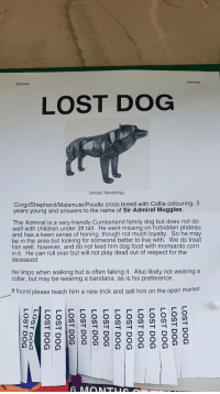 Children, Corgi, and Family: LOST DOG  (Artistic Rendering)  Corgi/Shepherd/Malamute/Poodle cross breed with Collie colouring, 5  years young and answers to the name of Sir Admiral Muggles.  The Admiral is a very friendly Cumberland family dog but does not do  well with children under 3ft tall. He went missing on forbidden plateau  and has a keen sense of honing, though not much loyalty. So he may  be in the area but looking for someone better to live with. We do treat  him well, however, and do not feed him dog food with monsanto corn  in it. He can roll over but will not play dead out of respect for the  deceased  He limps when walking but is often faking it. Also likely not wearing a  collar, but may be wearing a bandana, as is his preference.  If found please teach him a new trick and sell him on the open market. This comical lost dog flyer.