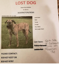 Bad, Beautiful, and Community: LOST DOG  Brown City. MI 48416  St. Clair Co.  REMINGTON/REMI  MİSSİNG SINCE: OCT,13, 201S  Great Dane  YOun  x Large  Tan/Black  Hair Length: Short  Last Seen: North Side  Fiohe Adhend Line on  addeRd Mowerson  Rd  PLEASE CONTACT:  810-627-6227 OR  810-627-8787 **MISSING IN BROWN CITY (near Lapeer Co., MI border)** This is Remi (male Great Dane) who went missing (10/13/18).  He was last seen on the north side of Galbraith Line on Mowerson Rd. If you have seen him or have any information, please call 810-627-6227 or 810-627-8787. Please share to help spread the word!  A note from the family: Update on Remi: Remi is still missing! We want to thank everyone who has been sharing our posts and watching for him. We truly appreciate all of the help! I'm going to try to keep this post as short as possible but I want to just be open and honest... This is a small community and I have a hard time understanding how a beautiful huge dog hasn't been seen. If you have him, I can totally understand why you would want to keep him. He is an amazing animal! If something bad happened to him, I understand that accidents happen. We just need peace. Please know that Remi is truly missed by our entire family. He is more than just a pet or dog to us! We drive around for miles upon miles several times a day and throughout the night searching for him and our hearts are truly broken. Please we beg of you to keep looking and call us with any information. Thank you all!