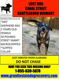 """Memes, Lost, and Thank You: LOST DOG  CANAL STREET  BRATTLEBORO VERMONT  Granite State  Dog Recovery  MISSING SINCE 6/16/18  """"DEE""""  SHEPHERD MIX  2 YEARS OLD  FEMALE  50 POUNDS  STREET SMART  MICROCHIPPED  *SLIPPED  COLLAR  JUST ARRIVED FROM ALABAMA  DO NOT CHASE  HAVE YOU SEEN THIS MISSING DOG?  1-855-639-5678  www.granitestatedogrecovery.com We are  happy to report that this dog was successfully trapped at 12am this morning.  Thank you toCathy Sullivan and her husband for going above and beyond for this dog and many others.  Photos coming later."""