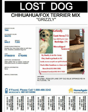 "7/11, Chihuahua, and Facebook: LOST DOG  CHIHUAHUA/FOX TERRIER MIX  ""GRIZZLY""  PRIMARY COLOR  TAN  Grizzly  SECONDARY COLOR  WHITE  Last Seen 7/5  Near 380 Peasler Lane  Rutledge, TN  SEX:  WEIGHT  7LBS  MALE  Mierochipped  Neutered  OTHER CHARACTERISTICS:  friendly, tiny, has a blue collar on with blue  bow, neutered, sweetest dog ever  LOST  AGE  My Daddy is in the Army  07/06/2019  6 YEARS  They had to go hack to NC  ADDITIONAL INFORMATION  Often called ""Giz"" or ""Gizzy"", loves car  rides,likes sound of cheese wrappers  Family in area can piek me upifTm found  Thad a blue handana wa how on it  MEDICAL INFORMATION  Mom (Des) 812 896-3a82  None  Gramma (Carolyn) B12 1 7620  MEDICAL CONDITIONS:  LAST SEEN  TN 37861. PEAVLER LANE OFF OLD BLUE SPRINGS RD IN  RUTLEDGE, TN  If Found, Please Call 1-888-466-3242  MICROCHIP # 985112011025392  HomeAgain  Always laoking t for your pet  D00 JSO  qu Ju enuenu  zeszouozuS96gdupo  Call: 1-888-466-3242  ChihuahuaFax Temier mb  2eCezouoZUS965 edpopg  Call: 1-888-466-3242  LOST DOG  Chihuah  Marochip 985112011025392  Call: 1-888-466-3242  LOST DOG  2es2OLOzise6 ponye  Call: 1-888-466-3242  LOST DOG  Call: 1-888-466-3242  LOST DOG  zeszOOZUS98 dupo  Call: 1-888-466-3242  LOST DOG  zeEszOoZISs edupoo Blount County Humane Society Courtesy Post: Microchip Number 985112011025392  7/11: still missing though the word is getting out more bc I've received a couple messages these past w days of individuals who thought they physically saw or noticed Grizzly in a post. Please keep looking. I believe w all my heart he's going to be found safe & soon.  My posts have been shared hundreds of times--thank you to each and every one who has taken the time to share, for keeping an eye out online, and in person. Words cannot convey the depth of my gratitude. I am still searching for places to post and cannot give up hope our baby is out there.   Update 7/9: still no word or even a message that anyone has seen him. Please if you live in or around Rutledge I am begging for your help. I love 200 miles away and at the mercy of the kindness of residents there to bring our baby home. In the comments I have posted a pic of the flyer generated by Home Again as well as the link with HelpingLostDogs.com   Original post: Please accept my apologies for the long post. I am posting from over 200 miles away at the mercy of the power of social media and the kindness of those who take the time to read/ share this.   I am messaging local businesses and groups around and in Rutledge despirately hoping for help. My daughter was in Rutledge, TN visiting her husband's family as they do each year. Her 6 year old mini chihuahua took off into the woods behind his uncle's place.  My son-in-law is active duty Army and they had to return to North Carolina Sunday (07 July) so we are pleading with anyone who sees this to please help bring our furbaby home. There are family members in the area who can meet to get him if he's found.  We've had Grizzly since he was 5 wks old and is my daughter's therapy dog by every aspect of its definition, but more than that, he is our furbaby.  ADDITIONAL PICTURES ALONG W PRINTABLE INFORMATION PIC BELOW  He is often called ""Giz"" or ""Gizzy"", loves car rides, friendly, but is skiddish if ""chased"". Loves the sound of cheese wrappers bc they sound like the wrapper of the treats we used to give him when we were housebreaking him.  Grizzly is microchipped with Home Again, and is up to date on shots, very lovable, and probably terrified. He is maybe 5lbs on a ""fat day."" He had a blue bandana w a bow on it when he was last seen as well as a white flea collar. He is neutered so has the blue tattoo on his belly from that.   I am hoping perhaps someone, a few people,would be such a blessing and print this picture and place it in/ around Rutledge for us it would be greatly appreciated. If you cannot print it--please PLEASE share. I have included a map where he was last seen as well as additional pics/ fliers in the comments.   We have notified Grainger Co Humane Society  Its been shared to the following pages/ groups via Facebook(condensed list) and registered with affiliated services of any listed:   Home Again Grainger Co, TN  Animal Lovers of Tennessee Paw Boost HelpingLostPets.com LostMyDoggie Critter Alert Various lost/ found pet page/ groups (Groups I've found in Central/Eastern TN) Any Businesses that I located around Rutledge.   I will gladly accept any further suggestions with an open heart and mind. Being unfamiliar with the area I am relying on ""related to"" links that show up on business/ group pages, Google, and the kindness of those who've made suggestions.   BUSINESS OWNERS--Please note, if I have posted to your page I would greatly appreciate it if you could please re-share to your page otherwise it will not be seen by your clients/ guests; it will only show under ""see visitor comments"".   Destinee Raye is my daughter if someone sees this, has him, or knows anything at all please message either of us. Thanks  Thanks for any direction and for taking the time to read and help bring our baby home."