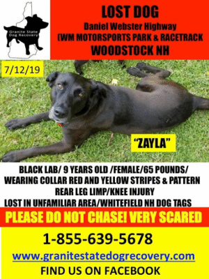 """Facebook, Family, and Memes: LOST DOG  Daniel Webster Highway  (WM MOTORSPORTS PARK&RACETRACK  Granite State  Dog Recovery  WOODSTOCK NH  7/12/19  """"ZAYLA""""  BLACK LAB/9 YEARS OLD/FEMALE/65 POUNDS/  WEARING COLLAR RED AND YELLOW STRIPES &PATTERN  REAR LEG LIMP/KNEE INJURY  LOST IN UNFAMILIAR AREA/WHITEFIELD NH DOG TAGS  PLEASE DO NOT CHASE! VERY SCARED  1-855-639-5678  www.granitestatedogrecovery.com  FIND US ON FACEBOOK Update: Zayla has been found safe. Welcome home. Message from family: 😍😍😍ZAYLA HAS BEEN FOUND!! 😍😍😍 THANK YOU TO EVERYONE THAT HELPED!!"""
