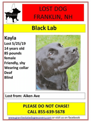 Facebook, Memes, and Lost: LOST DOG  FRANKLIN, NH  Dog Recover  Black Lab  Kayla  Lost 5/25/19  14 years old  85 pounds  female  Friendly, shy  Wearing collar  Deaf  Blind  Lost from: Aiken Ave  PLEASE DO NOT CHASE!  CALL 855-639-5678  www.granitestatedogrecovery.com or visit us on facebook URGENT - LOST DEAF AND BLIND DOG- FRANKLIN, NH - Kayla went missing 5/25/19 from her yard on Aiekn Ave in Franklin, NH went she was accidently let out by a child.  She is a female, 14 year old, 85 pound, black lab.  She is deaf and blind!  She is wearing a collar and is friendly and shy.  Please keep your eyes open for this girl and call right away if sen. 855-639-5678.