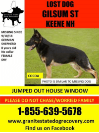 Facebook, Family, and Memes: LOST DOG  GILSUM ST  KEENE NH  Granite State  Dog Recovery  MISSING SINCE  9/18/18  GERMAN  SHEPHERD  8 years olod  No collar  FEMALE  SHY  COCOA  PHOTO IS SIMILAR TO MISSING DOG  JUMPED OUT HOUSE WINDOW  PLEASE DO NOT CHASE/WORRIED FAMILY  1-855-639-5678  www.granitestatedogrecovery.com  Find us on Facebook Update: Found safe   Missing female german shepherd from Gilsum Street in Keene NH since 9/18/18.  Cocoa is a 8 year old female/wearing no collar/and shy.  Jumped out house window.  Call 1--855-639-5678 witha ny information.