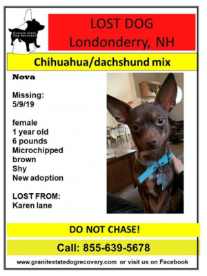 Chihuahua, Facebook, and Memes: LOST DOG  Granite State  Dog Recover  Londonderry, NH  Chihuahua/dachshund mix  Nova  Missing:  5/9/19  female  1 year old  6 pounds  Microchipped  brown  Shy  New adoption  LOST FROM:  Karen lane  DO NOT CHASE!  Call: 855-639-5678  www.granitestatedogrecovery.com or visit us on Facebook LOST PUPPY - LONDONDERRY, NH -  Nova went missing 5/9/19 from Karen Lane in Londonderry, NH.  Nova is just one year, and 6 pound, female, shy, microchipped, brown, chihuahua/ dachshund mix.  She is a new adoption so she does not know the area.  Please do not call our or chase her and call right away if seen. 855-639-5678