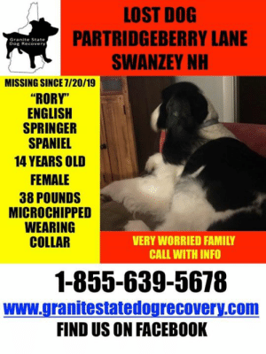 """Facebook, Family, and Memes: LOST DOG  PARTRIDGEBERRY LANE  SWANZEY NH  Granite State  Dog Recovery  MISSING SINCE 7/20/19  """"RORY""""  ENGLISH  SPRINGER  SPANIEL  14 YEARS OLD  FEMALE  38 POUNDS  MICROCHIPPED  WEARING  COLLAR  VERY WORRIED FAMILY  CALL WITH INFO  1-855-639-5678  www.granitestatedogrecovery.com  FIND US ON FACEBOOK URGENT: Missing 14 year old English Springer Spaniel from Partridgeberry Lane in Swanzey NH. If you live in the area, please check your property.  1-855-639-5678."""