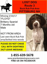 "We have such wonderful news to report that this little pup has been found and is safe and sound with his family in Pittsburg NH.    Floyd was found in the middle of the frozen lake by a snowmobiler.  It took over 1 hour to get him to safety as he was very scared and panicked due to being out all night in the woods.   Thank you to everyone that searched for this little guy in -12 degree weather.  We would like to thank the local snowmobile club for searching for him.   Thank you to all  local residents in the Pittsburg NH area that went above and beyond for a dog that they did not know.      GSDR would like to thank all for being part of this amazing village, we could not do this without the help of every single one of you.   Together we will bring them home where they belong.: LOST DOG  Route 3  Granite State  Buck Rub Pub Area  Dog Recovery  PITTSBURG NH  Missing 2/10/17  ""FLOYD''  Brittany Spaniel  7 Months old  Male  NOT FROM AREA  Last seen Buck Rub Pub  area/bolted into woods  PLEASE DO NOT CHASE  CALL WITH SIGHTINGS  24/7 LEAVE MESSAGE  1-855-639-5678  www.granitestatedogrecovery.com  FIND US ON FACEBOOK We have such wonderful news to report that this little pup has been found and is safe and sound with his family in Pittsburg NH.    Floyd was found in the middle of the frozen lake by a snowmobiler.  It took over 1 hour to get him to safety as he was very scared and panicked due to being out all night in the woods.   Thank you to everyone that searched for this little guy in -12 degree weather.  We would like to thank the local snowmobile club for searching for him.   Thank you to all  local residents in the Pittsburg NH area that went above and beyond for a dog that they did not know.      GSDR would like to thank all for being part of this amazing village, we could not do this without the help of every single one of you.   Together we will bring them home where they belong."