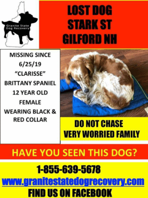 """Facebook, Family, and Memes: LOST DOG  STARK ST  GILFORD NH  Granite State  Dog Recovery  MISSING SINCE  6/25/19  """"CLARISSE""""  BRITTANY SPANIEL  12 YEAR OLD  FEMALE  WEARING BLACK &  RED COLLAR  DO NOT CHASE  VERY WORRIED FAMILY  HAVE YOU SEEN THIS DOG?  1-855-639-5678  www.granitestatedogrecovery.com  FIND US ON FACEBOOK Update 06/30/2019 Clarisee has been found safe  Message from her family: She's home!! Someone found her this afternoon. Thank you for all the shares."""