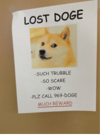Doge Scare And School LOST DOGE SUCH TRUBBLE SO SCARE WOW PLZ