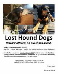 MACON CO., NC-- 2 LOST DOGS: Lost Hound Dogs  Reward offered, no questions asked.  Black & Tan Coonhound Mix (female)  Blue Tick-Pointer Mix (male) black & gray ticking, light brown paws, black spots  Ran off after a squirrel on Monday 30 April 2018 from their home in the Rainbow  Springs/Standing Indian area on West Old Murphy Rd. (12 miles west of Franklin).  They are super friendly sweet hearts. Our best friends.  If you have any information, please contact us:  Call (828) 369-0329 or Text (919) 621-0844  Thank you!  Michelle & Ezra MACON CO., NC-- 2 LOST DOGS